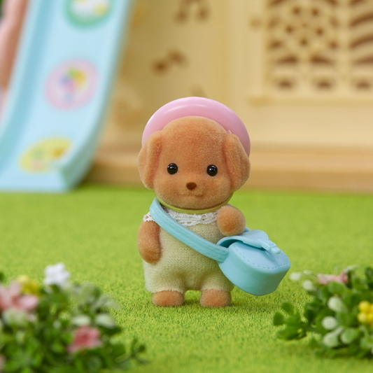 Toy Poodle Baby - 4