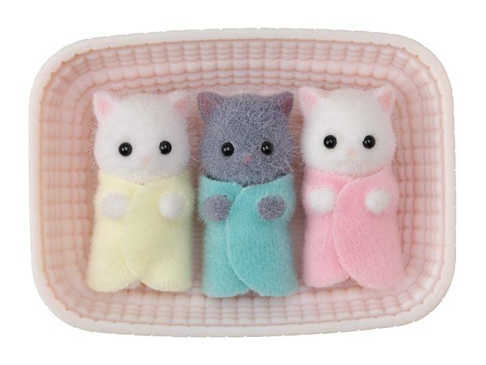 Persian Cat Triplets - 4
